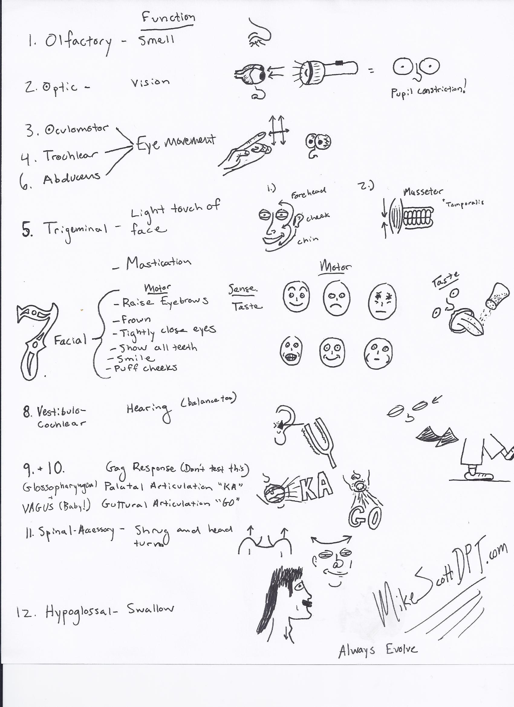 cranial nerve exam cheat sheet mike scott dpt. Black Bedroom Furniture Sets. Home Design Ideas